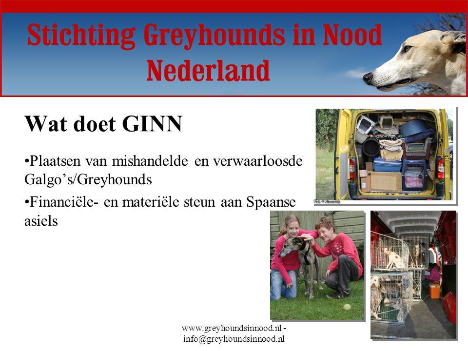 www.greyhoundsinnood.nl - info@greyhoundsinnood.nl