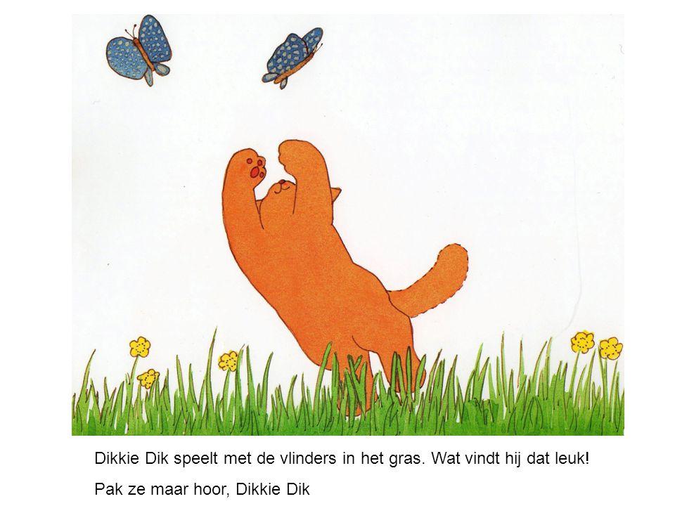 Dikkie Dik speelt met de vlinders in het gras. Wat vindt hij dat leuk!