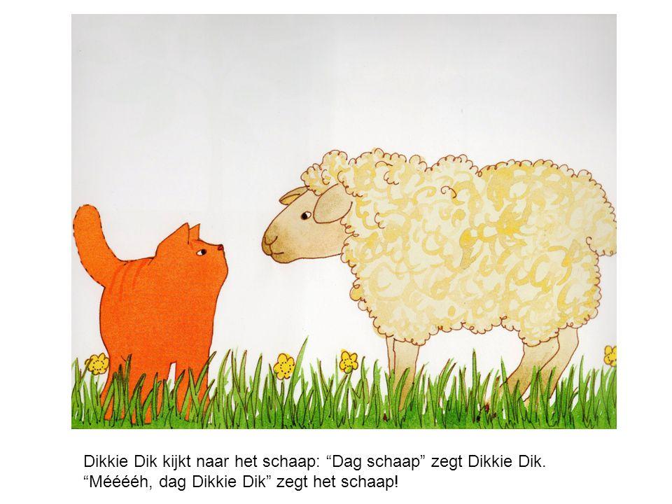 Dikkie Dik kijkt naar het schaap: Dag schaap zegt Dikkie Dik