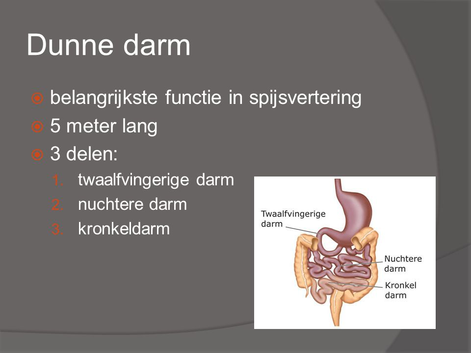 Dunne darm belangrijkste functie in spijsvertering 5 meter lang