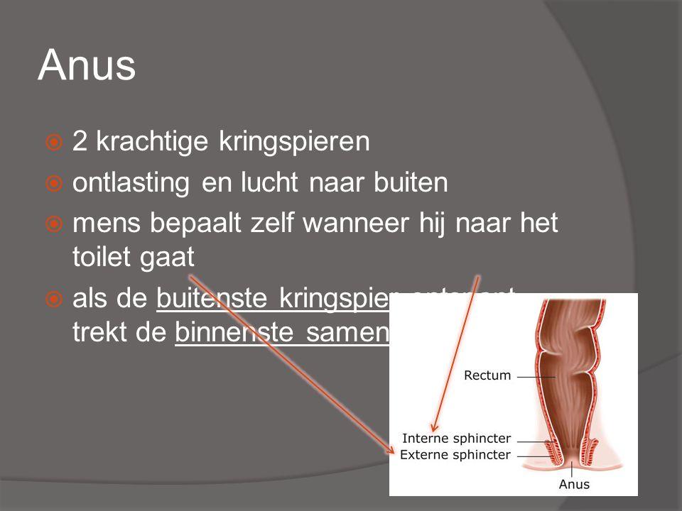 Anus 2 krachtige kringspieren ontlasting en lucht naar buiten