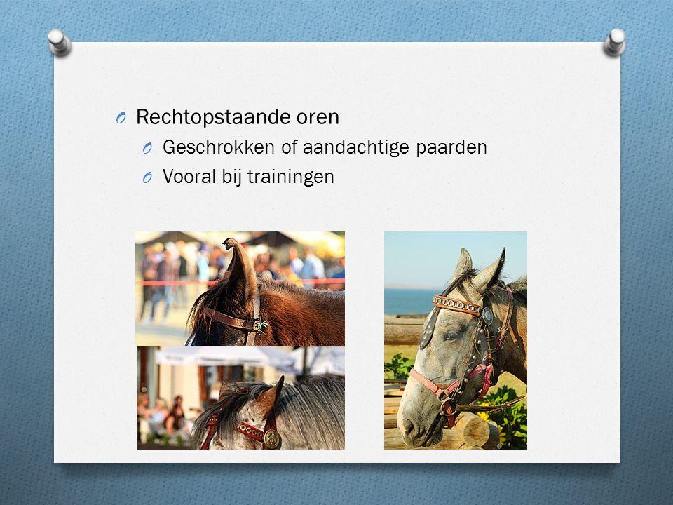 Rechtopstaande oren Geschrokken of aandachtige paarden