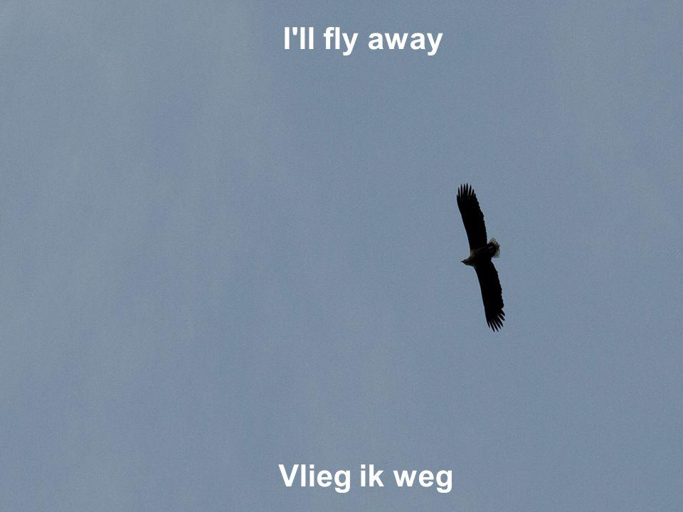 I ll fly away Vlieg ik weg