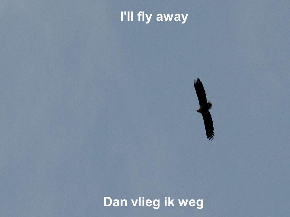 I ll fly away Dan vlieg ik weg