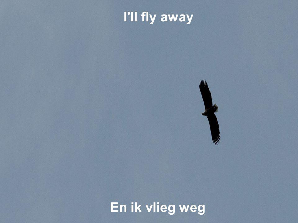 I ll fly away En ik vlieg weg