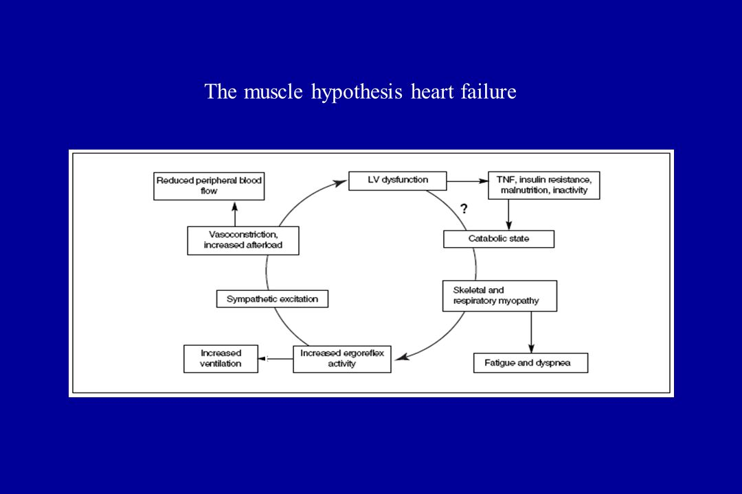The muscle hypothesis heart failure