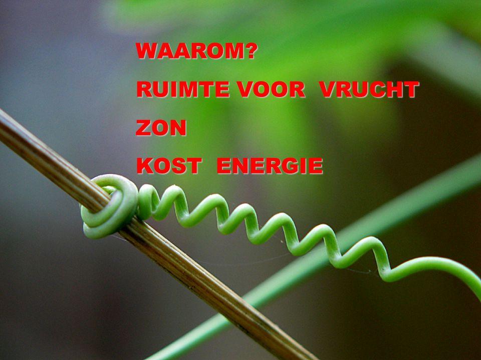 WAAROM RUIMTE VOOR VRUCHT ZON KOST ENERGIE