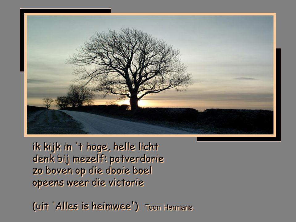 ik kijk in t hoge, helle licht denk bij mezelf: potverdorie zo boven op die dooie boel opeens weer die victorie (uit Alles is heimwee )