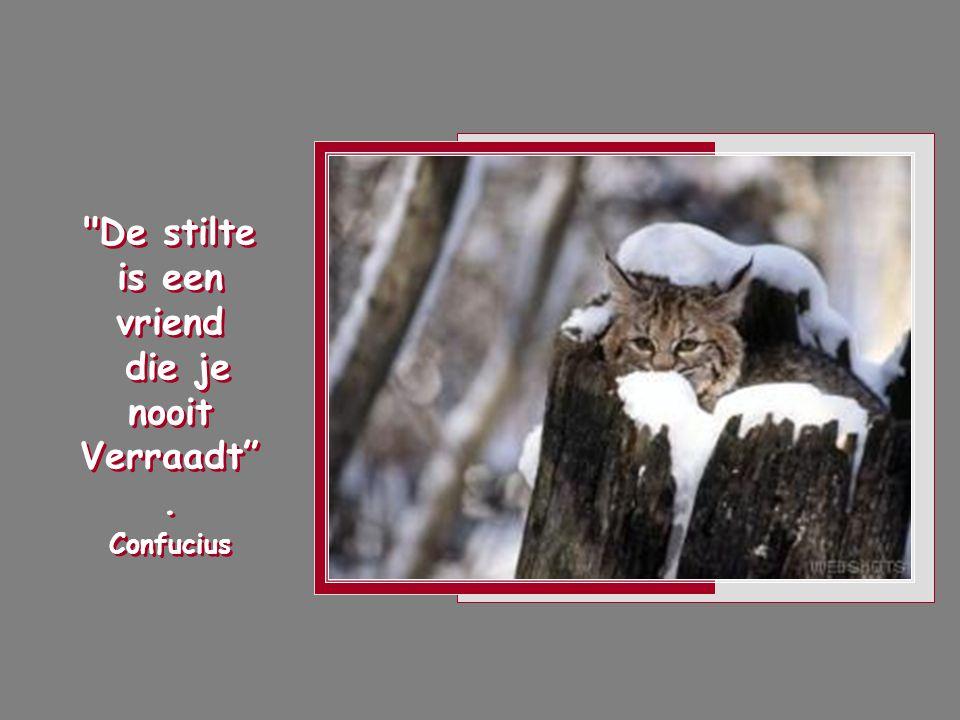 De stilte is een vriend die je nooit Verraadt . Confucius