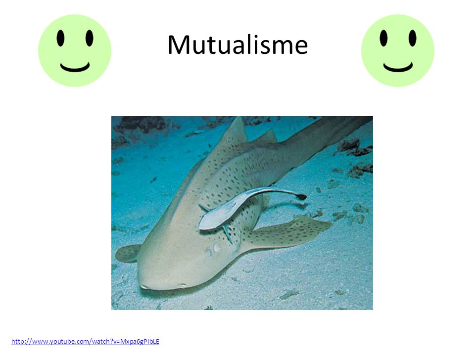 Mutualisme http://www.youtube.com/watch v=Mxpa6gPIbLE