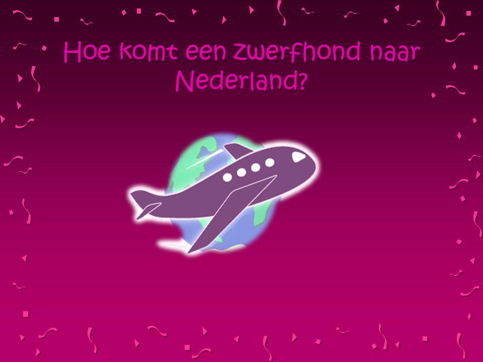 Hoe komt een zwerfhond naar Nederland