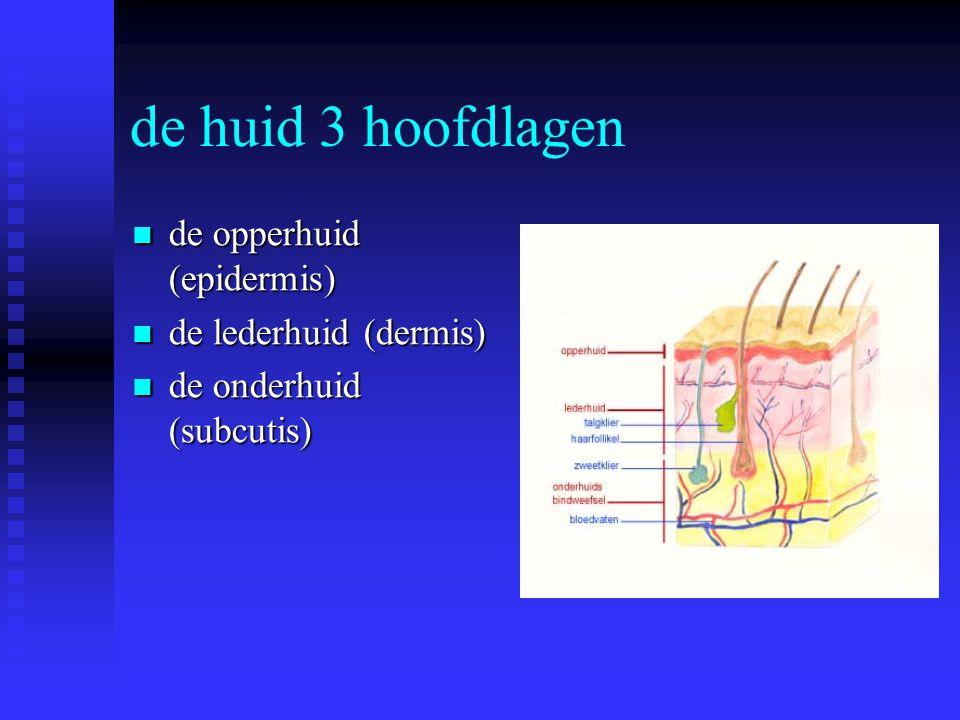 de huid 3 hoofdlagen de opperhuid (epidermis) de lederhuid (dermis)