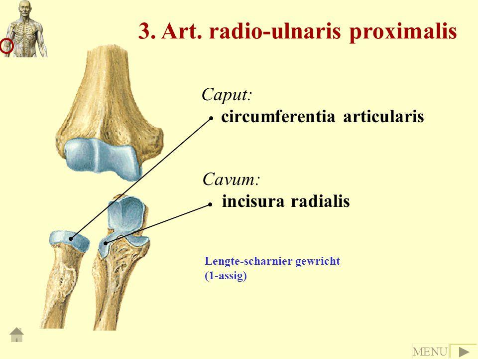3. Art. radio-ulnaris proximalis