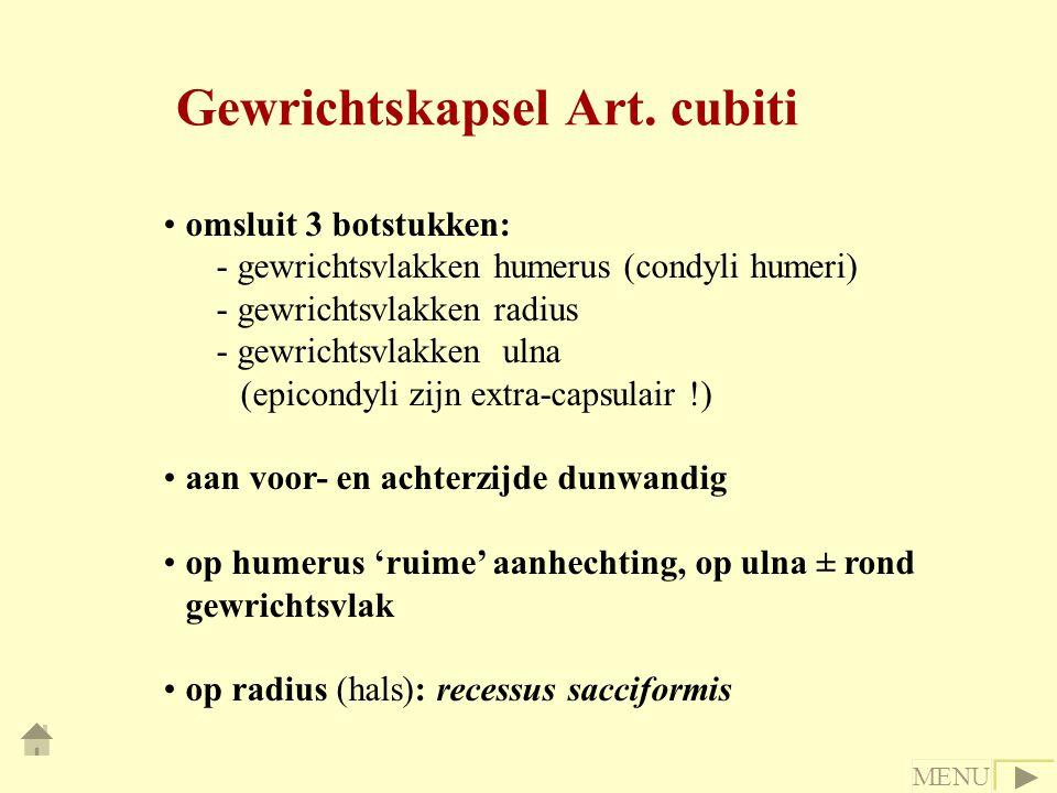 Gewrichtskapsel Art. cubiti