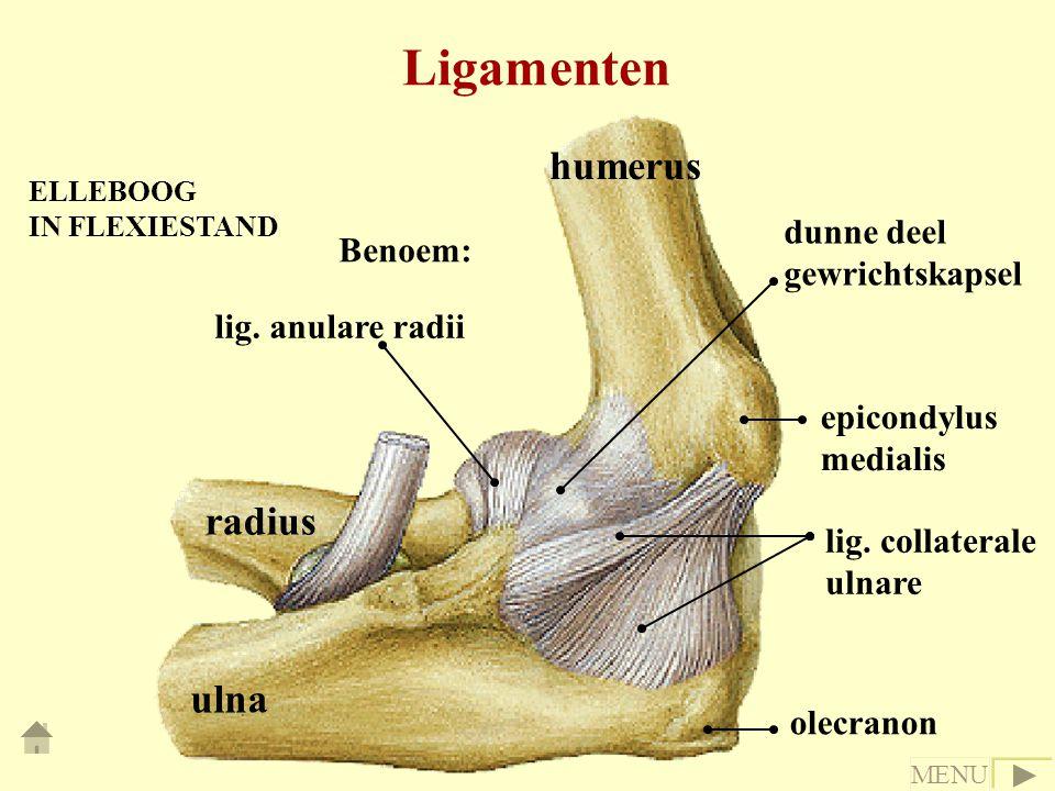 Ligamenten humerus radius ulna dunne deel gewrichtskapsel Benoem: