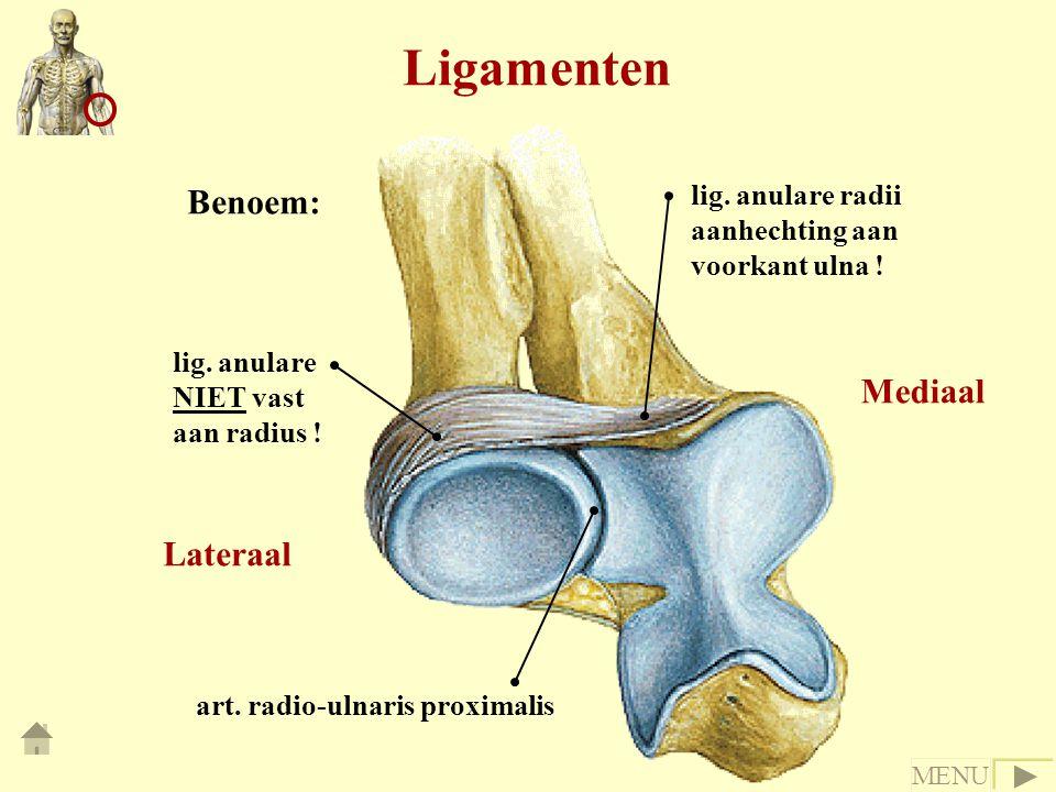 Ligamenten Benoem: Mediaal Lateraal lig. anulare radii