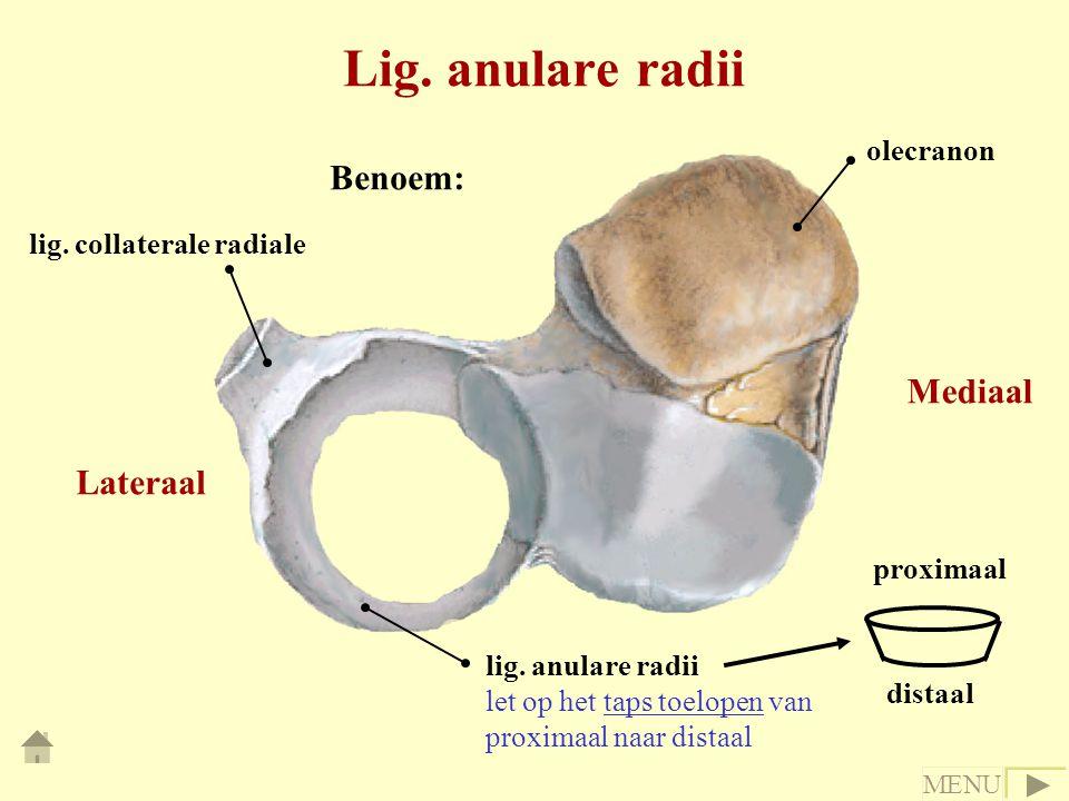 Lig. anulare radii Benoem: Mediaal Lateraal olecranon