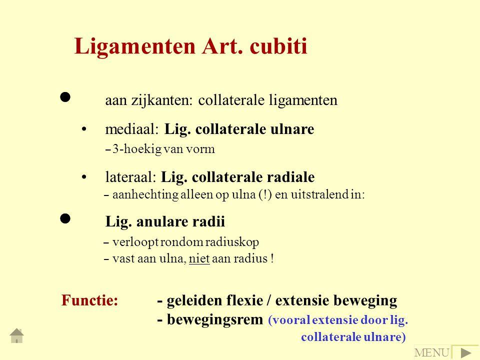 Ligamenten Art. cubiti aan zijkanten: collaterale ligamenten
