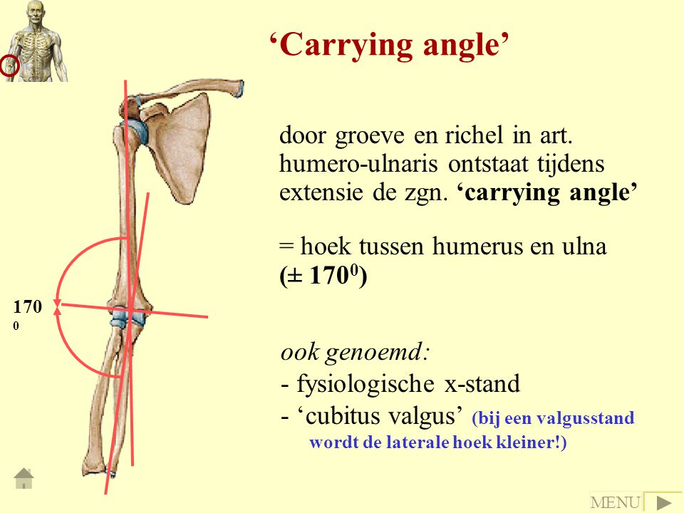 'Carrying angle' door groeve en richel in art. humero-ulnaris ontstaat tijdens extensie de zgn. 'carrying angle'