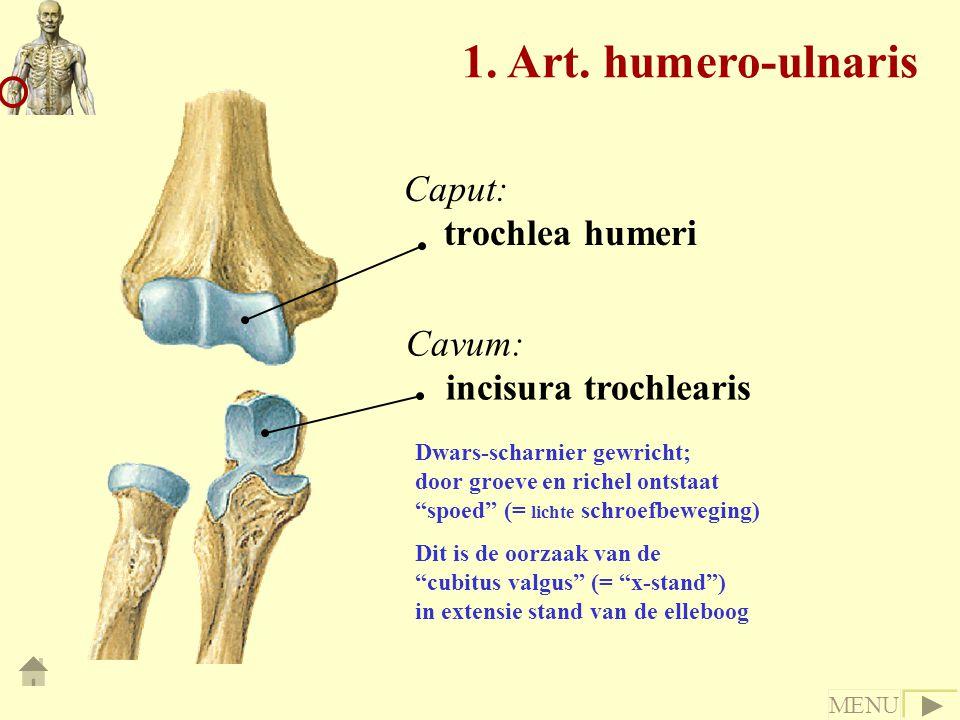 1. Art. humero-ulnaris Caput: trochlea humeri Cavum: