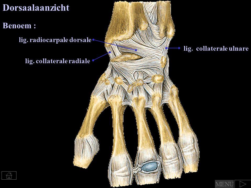 Dorsaalaanzicht Benoem : lig. radiocarpale dorsale