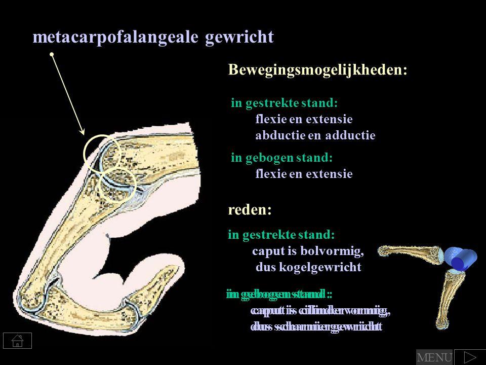 metacarpofalangeale gewricht
