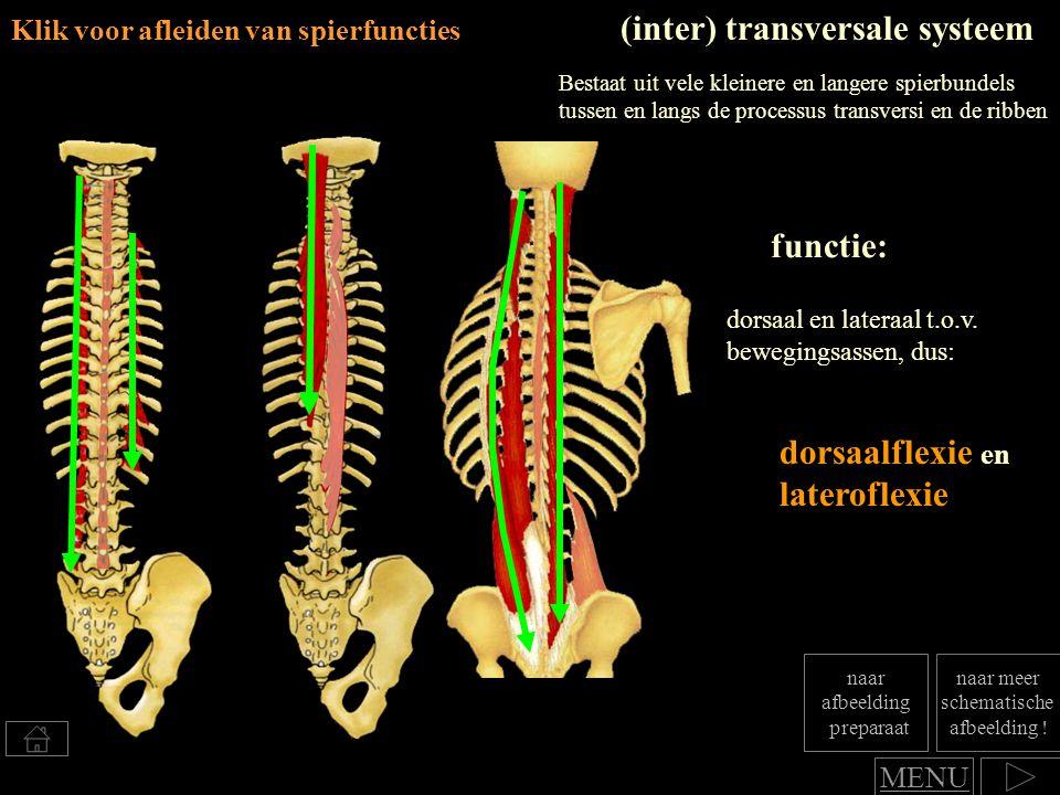 (inter) transversale systeem
