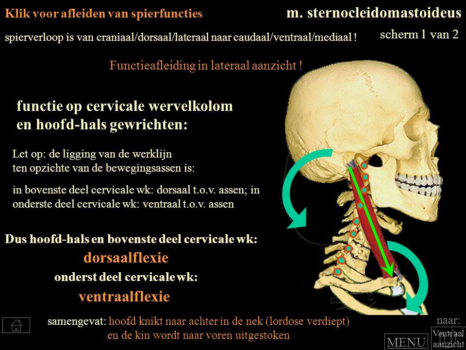 dorsaalflexie ventraalflexie