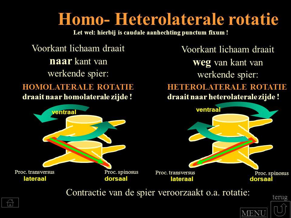 Homo- Heterolaterale rotatie