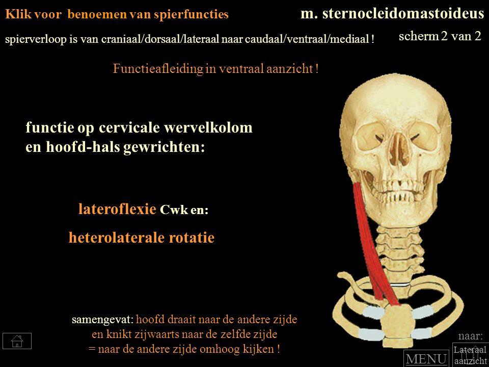 heterolaterale rotatie