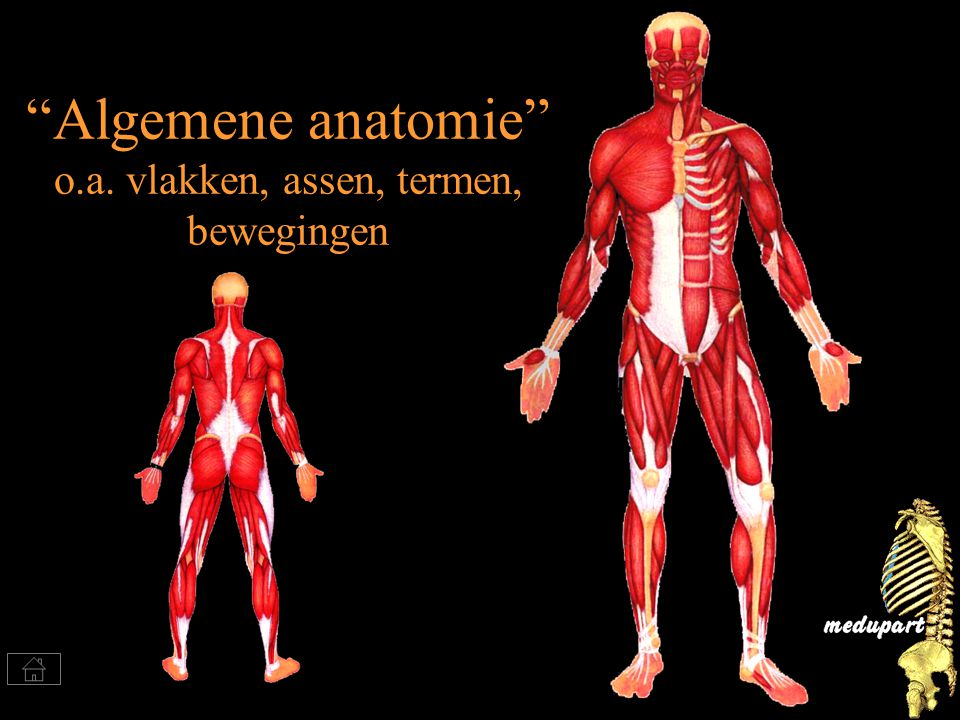 Algemene anatomie o.a. vlakken, assen, termen, bewegingen