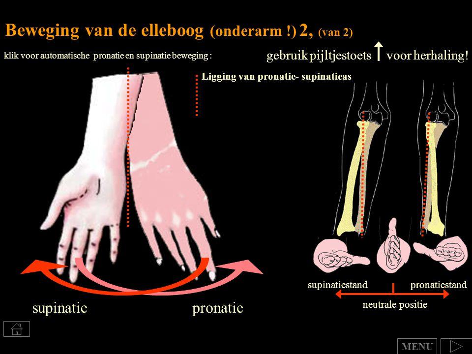 Beweging van de elleboog (onderarm !) 2, (van 2)