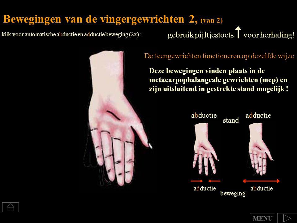 Bewegingen van de vingergewrichten 2, (van 2)