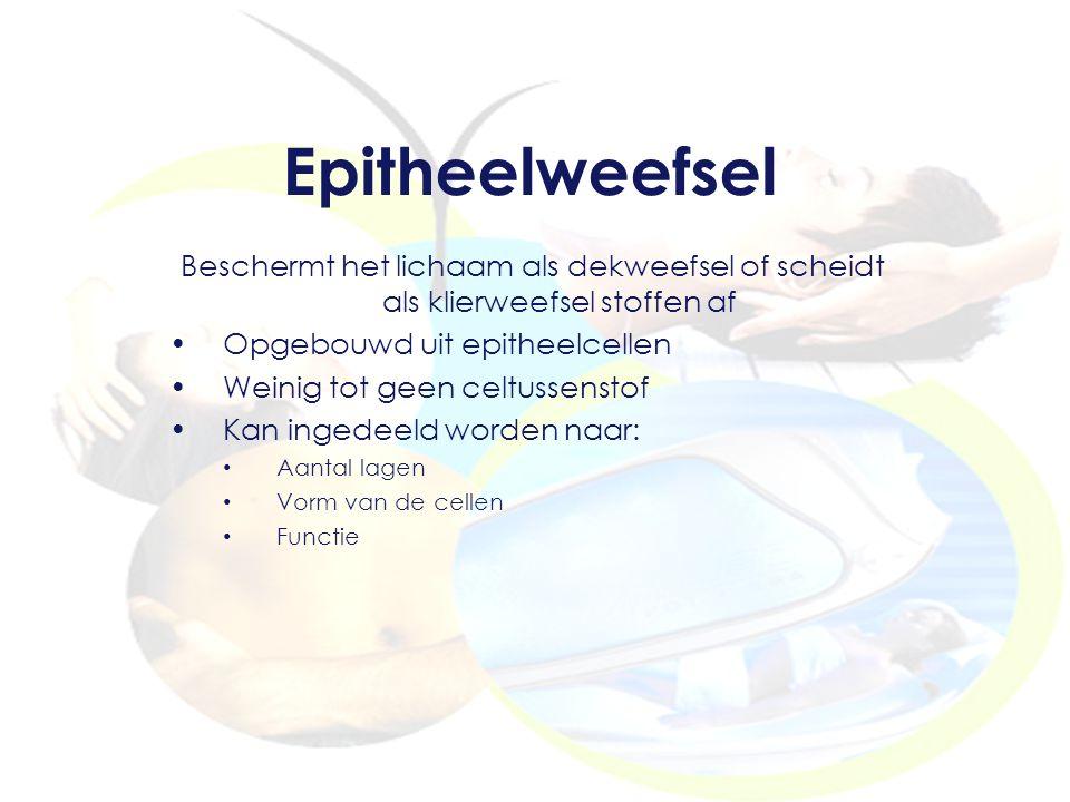 Epitheelweefsel Beschermt het lichaam als dekweefsel of scheidt als klierweefsel stoffen af. Opgebouwd uit epitheelcellen.