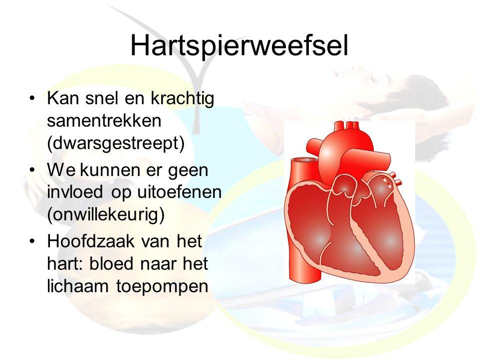Hartspierweefsel Kan snel en krachtig samentrekken (dwarsgestreept)