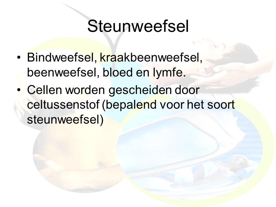 Steunweefsel Bindweefsel, kraakbeenweefsel, beenweefsel, bloed en lymfe.