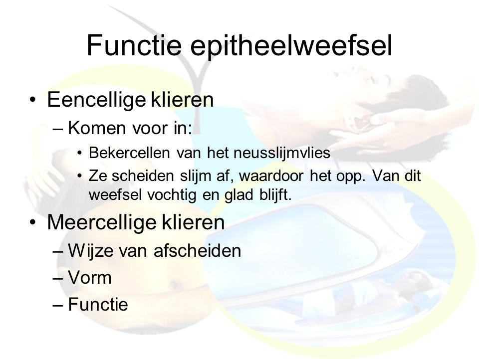 Functie epitheelweefsel