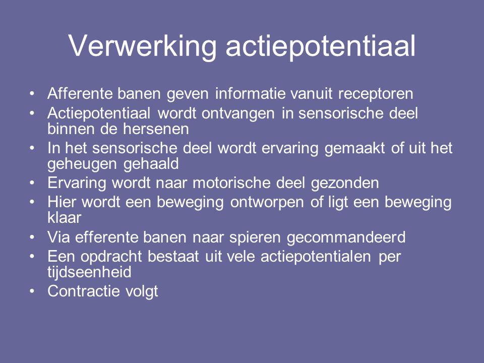 Verwerking actiepotentiaal