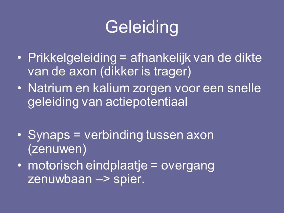 Geleiding Prikkelgeleiding = afhankelijk van de dikte van de axon (dikker is trager)