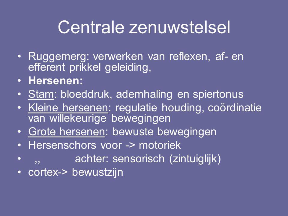 Centrale zenuwstelsel