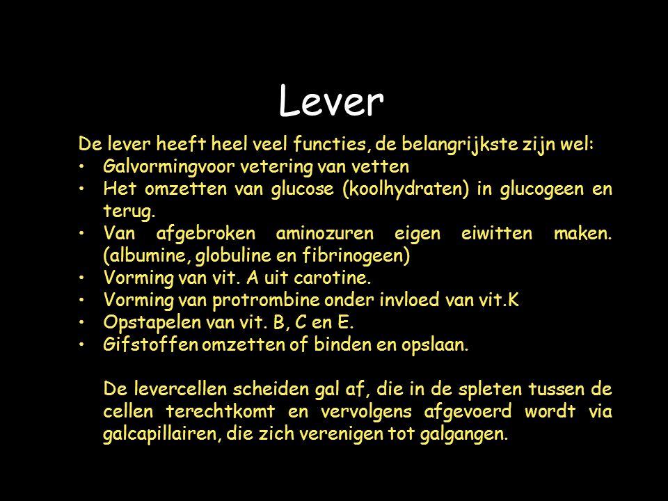 Lever De lever heeft heel veel functies, de belangrijkste zijn wel: