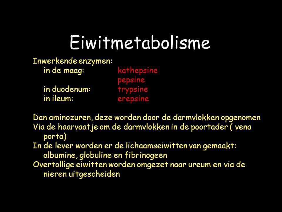 Eiwitmetabolisme Inwerkende enzymen: in de maag: kathepsine pepsine