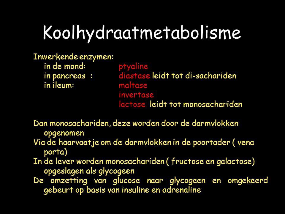 Koolhydraatmetabolisme