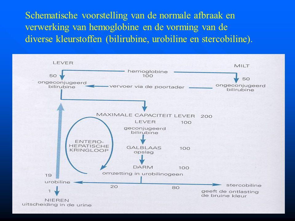 Schematische voorstelling van de normale afbraak en verwerking van hemoglobine en de vorming van de diverse kleurstoffen (bilirubine, urobiline en stercobiline).