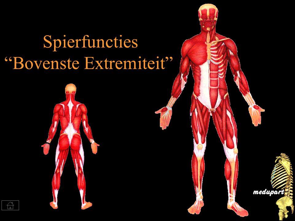 Spierfuncties Bovenste Extremiteit