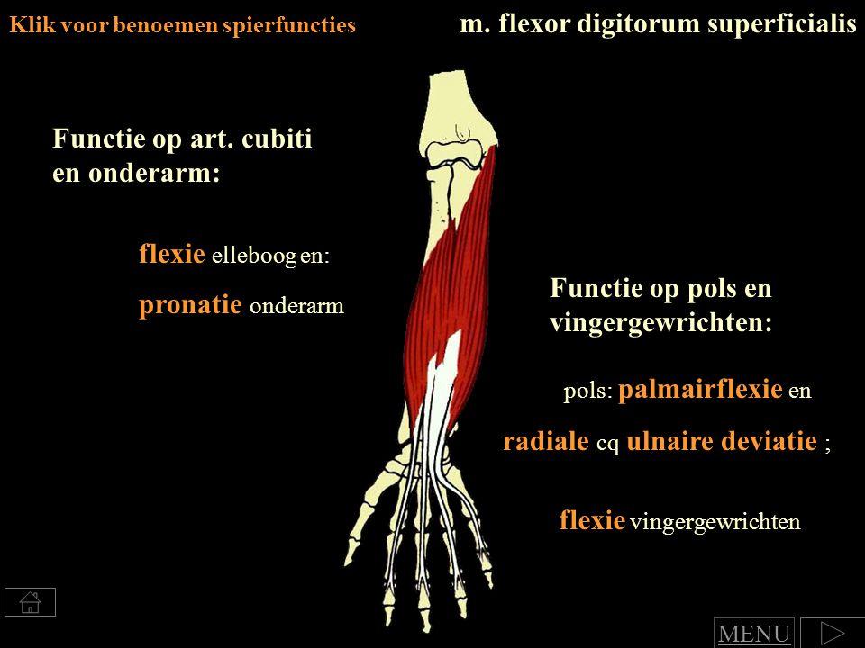 flexie vingergewrichten