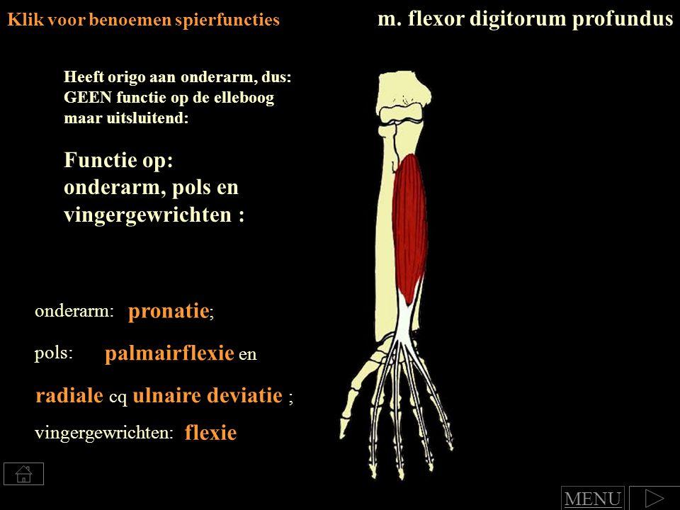 m. flexor digitorum profundus