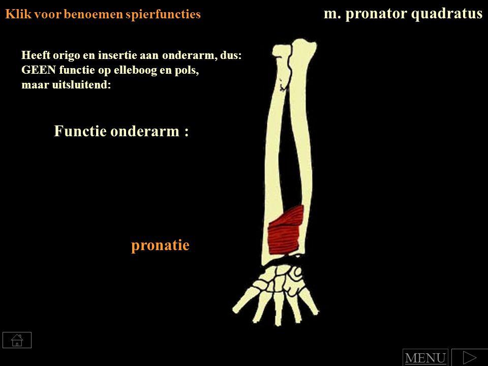 m. pronator quadratus Functie onderarm : pronatie