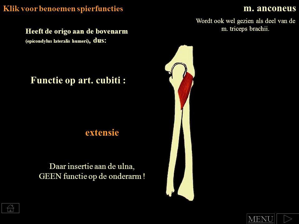 m. anconeus Functie op art. cubiti : extensie