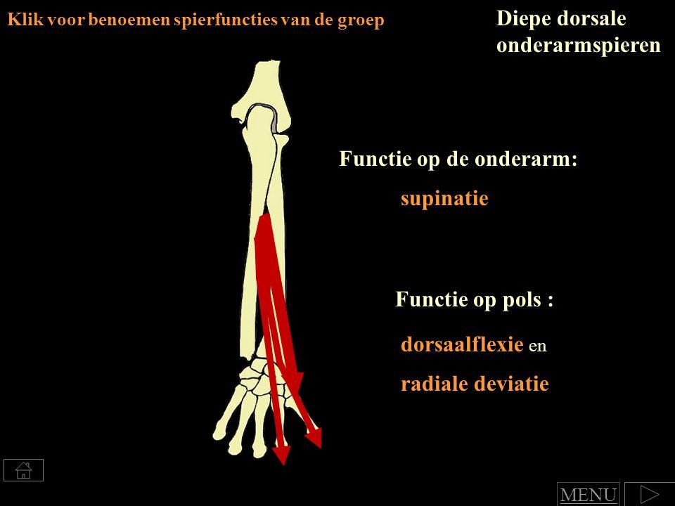 Diepe dorsale onderarmspieren